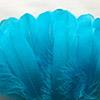 Bleu Caribbean